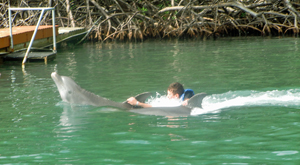 Riding a Dolphin in Barbados